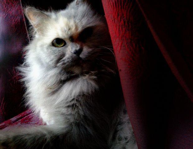 cute pets & animals cat