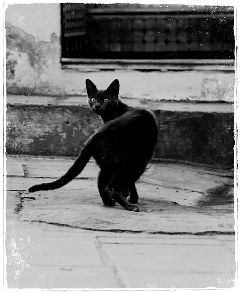pets & animals photography black & white cat travel