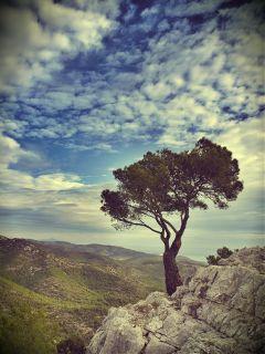 sky tree mediterranean solitude nature