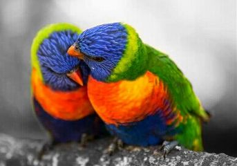 saint valentine pets & animals nature love emotions