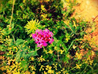 color splash summer spring nature flower