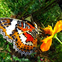 indonesia photography pets & animals colorful butterfly