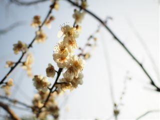 flower cute japan spring nature