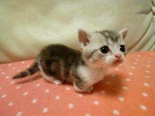 cute sweet cat kitty pets & animals