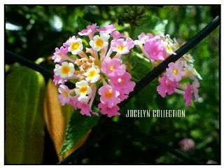 interesting photography nature emotions flower