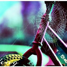 spider web bokeh light