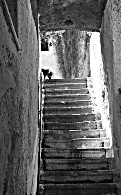 black & white pets & animals photography cat stairs