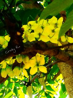 yellow colorful cute flower nature
