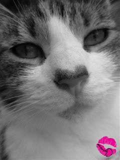cute cat black & white photography pets & animals