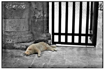 pets & animals emotions photography hdr black & white