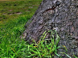 colorful curves tool nature rain