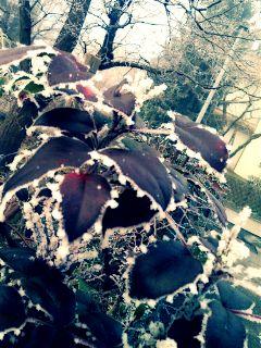winter not4me