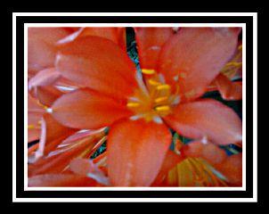 color splash nature colorful flower spring hdr