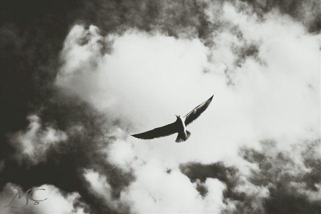 how to photograph birds both far and near