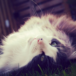 cute spring love cats sunshine