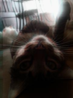 pets & animals photography color splash cats emotions