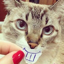 haha cat funny pets & animals photography