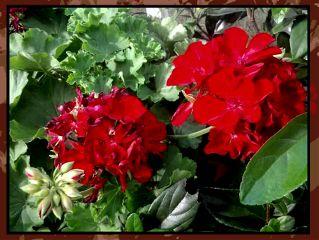 photography flower edit challenge