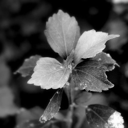 photography art nature emotions tree