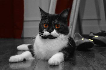 cat chat quotes & sayings pets & animals black & white photography