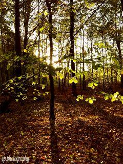 nature hdr sun lights autumn